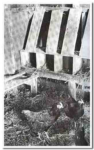 coop-nest-boxes1