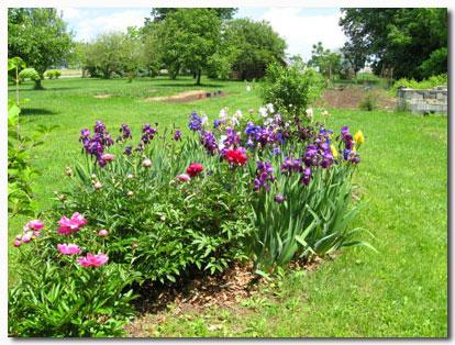 http://organictobe.org/wp-content/uploads/2009/06/gene-iris.jpg