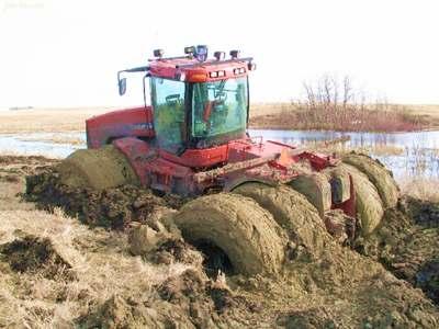 Farmers Harvesting Crops Harvesting Crops in The Mud