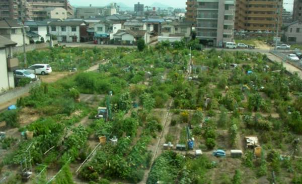 Farming Starts In Cities The Contrary Farmer
